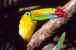 the amazing animals of Costa Rica